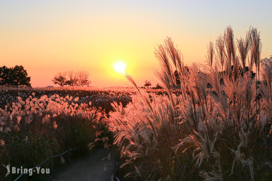 【韓國首爾景點】天空公園,10.11月限定的芒草、粉黛亂子草和波波草(韓妞的IG打卡景點)