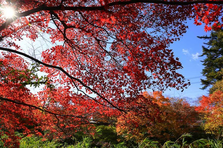 京都瑠璃光院楓葉
