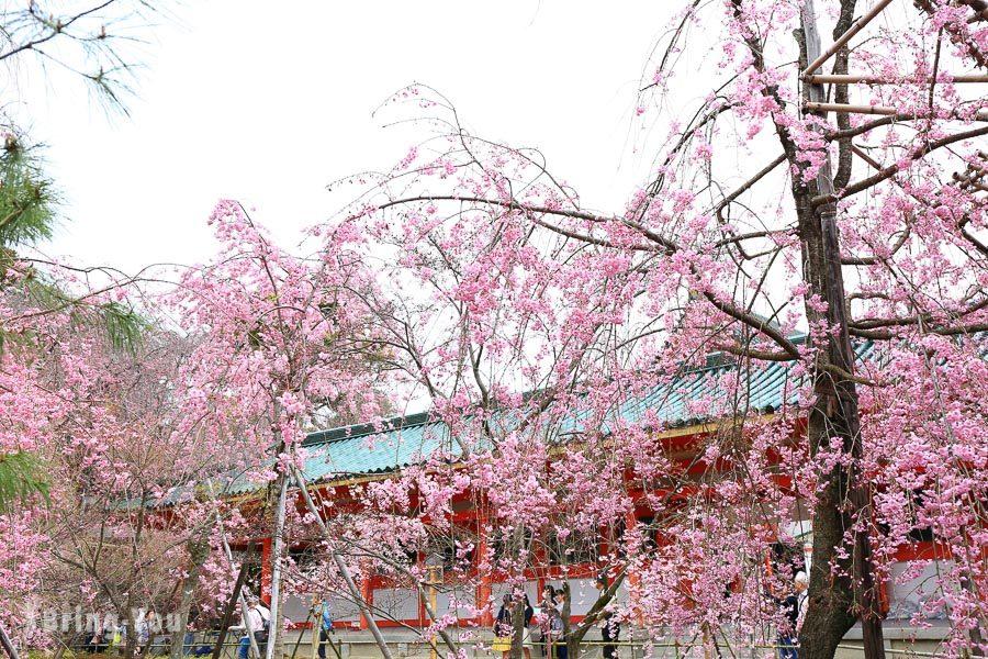 京都平安神宮櫻花