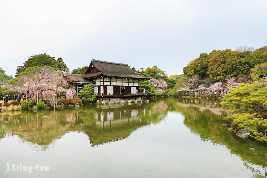 【京都賞櫻景點】平安神宮:南神苑、東神苑必看櫻花倒影、超大鳥居