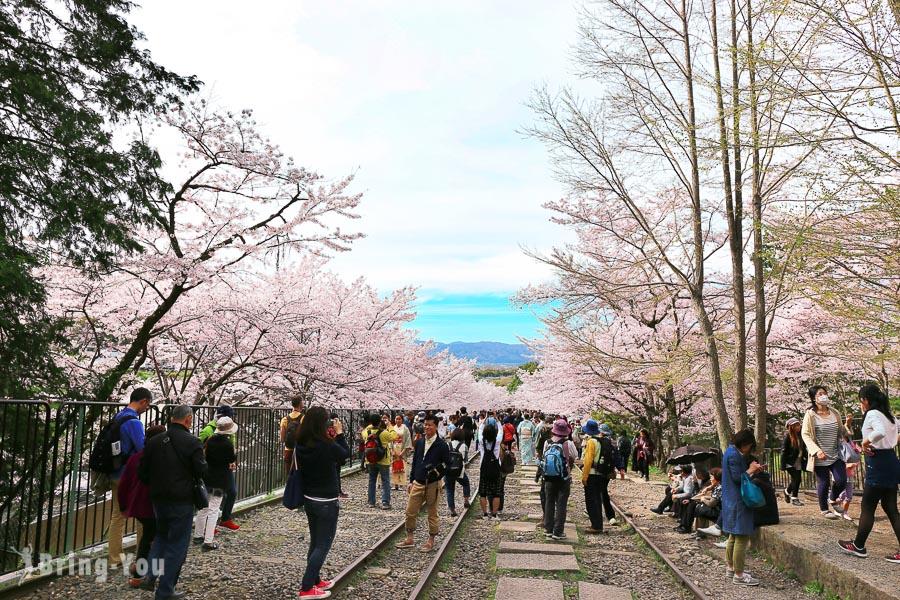 【京都賞櫻景點】蹴上鐵道、琵琶湖疏⽔、舊鐵道櫻花絕景之賞櫻路線、交通攻略