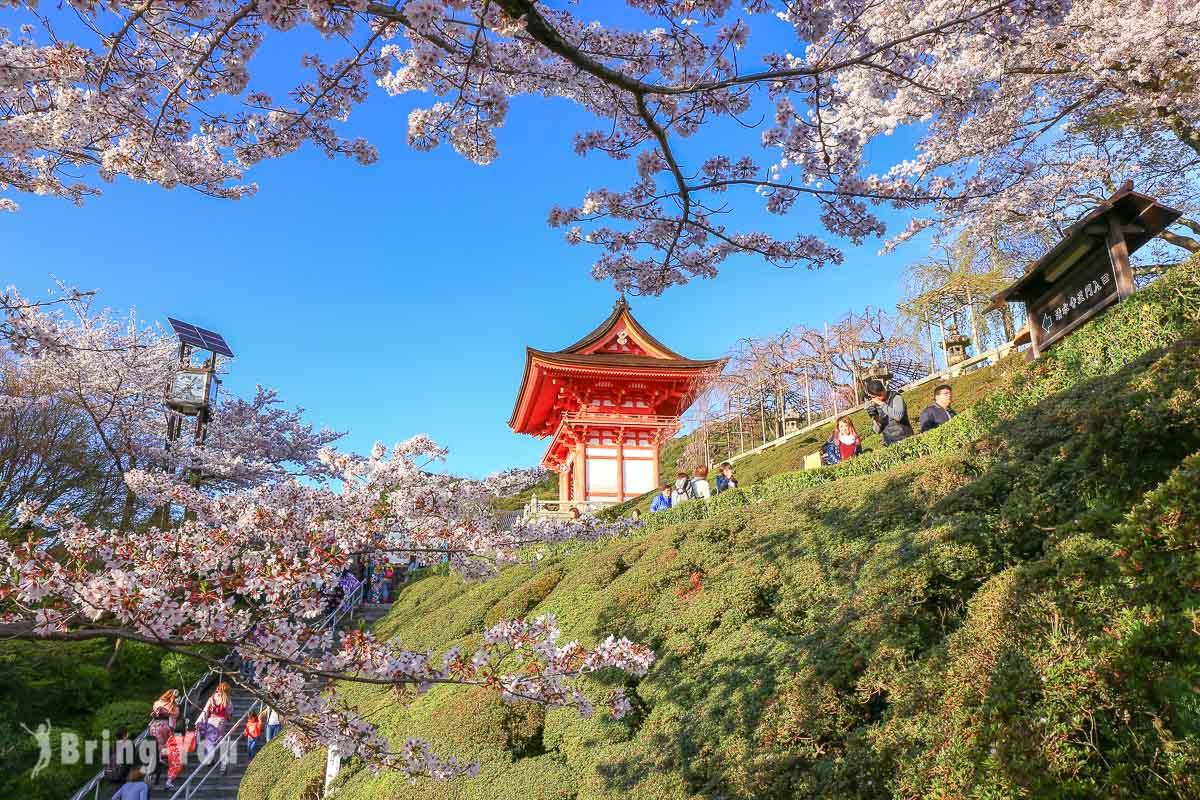 清水寺櫻花