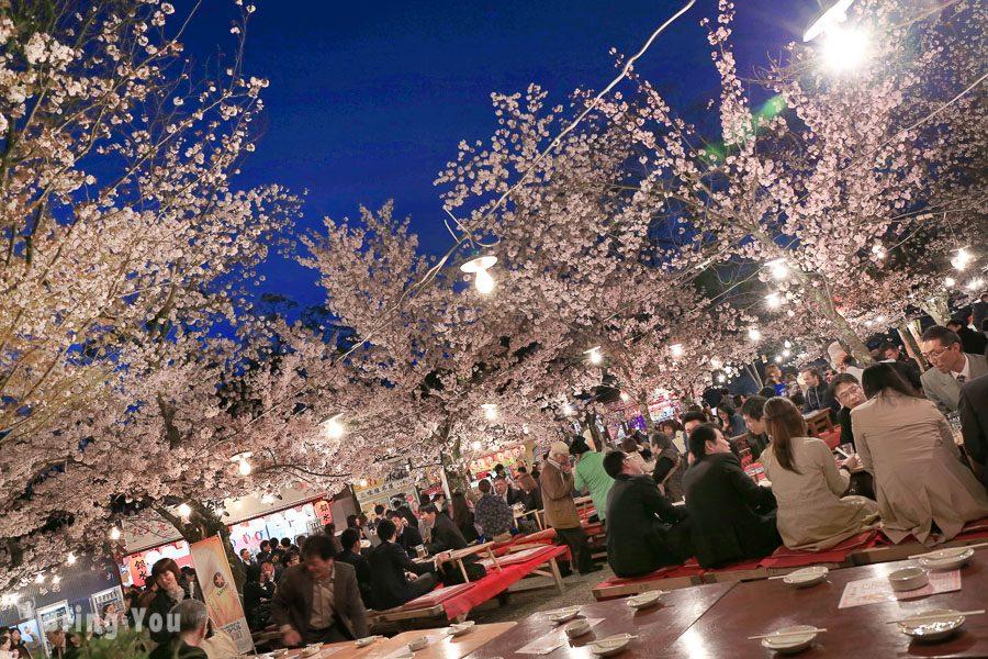 京都圓山公園夜櫻