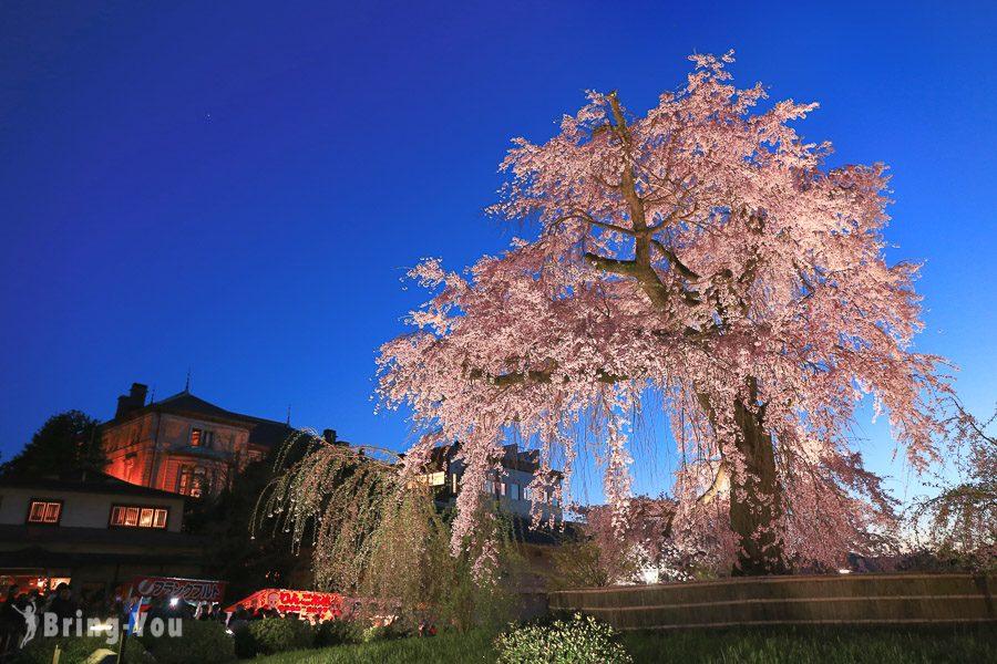 圓山公園櫻花女王