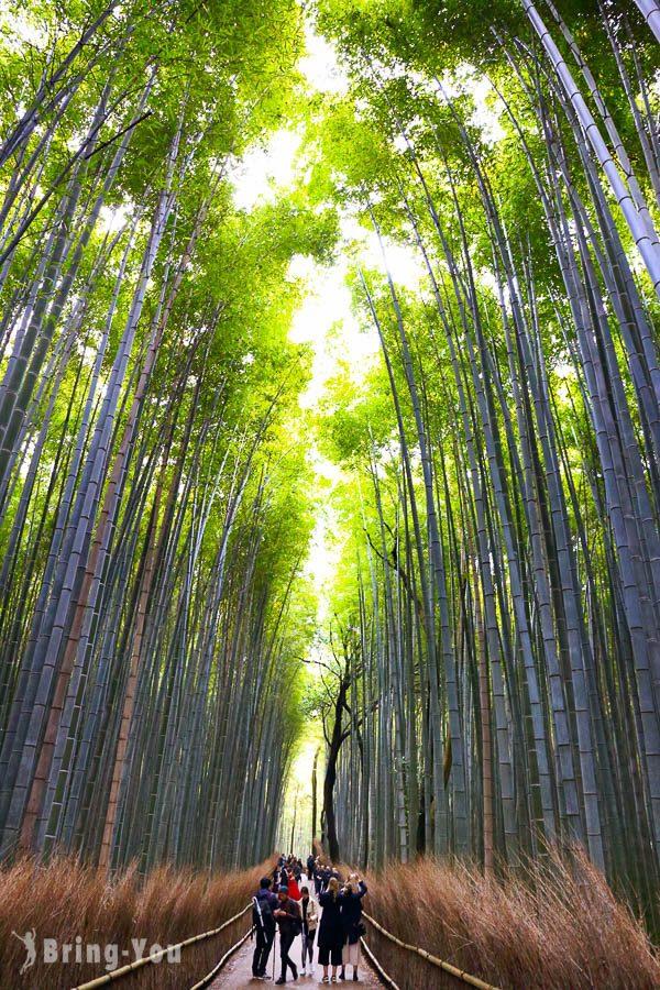 嵐山竹林小徑