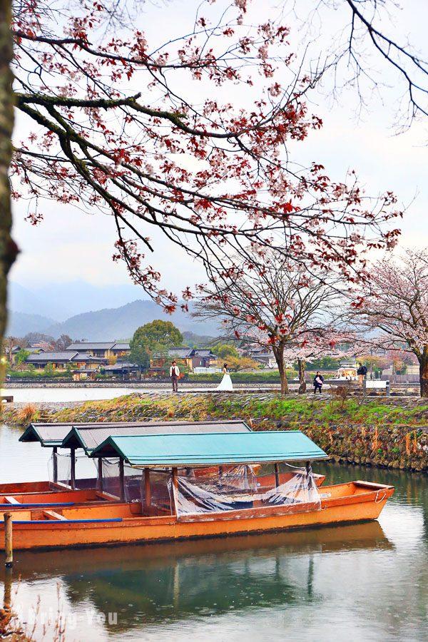 嵐山公園 賞櫻