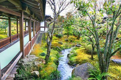 【京都嵐山賞櫻趣】天龍寺:世界文化遺產狂放滿開的枝垂櫻,驚為天人!