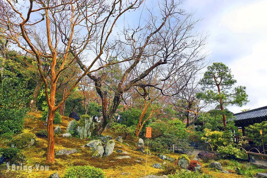 天龍寺櫻花