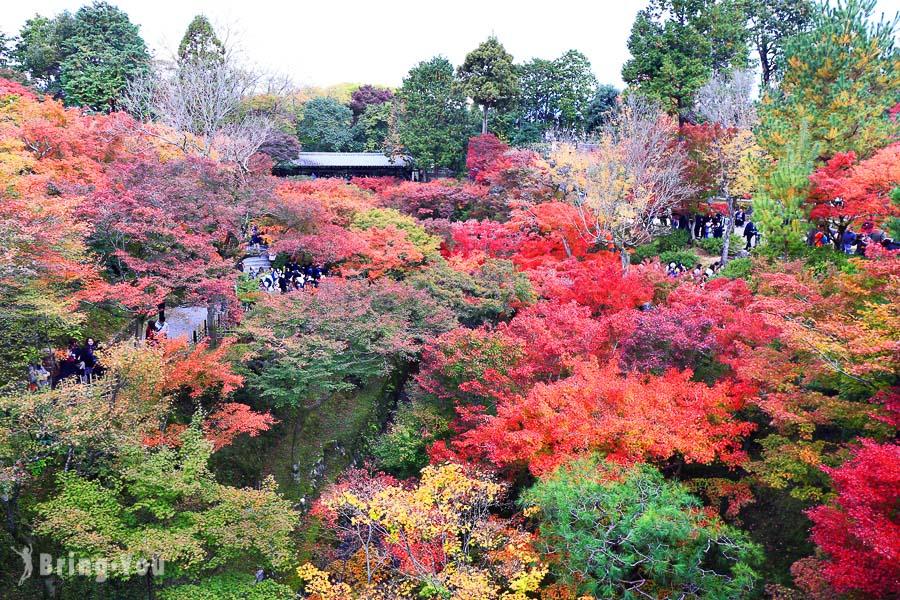 【京都賞楓景點】東福寺:京都賞楓第一名所,通天橋視角的紅葉絕景