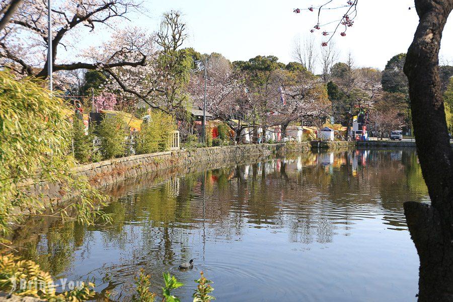 上野公園不忍池櫻花