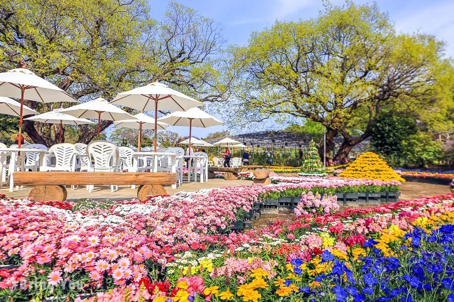 足利花卉公園玫瑰園