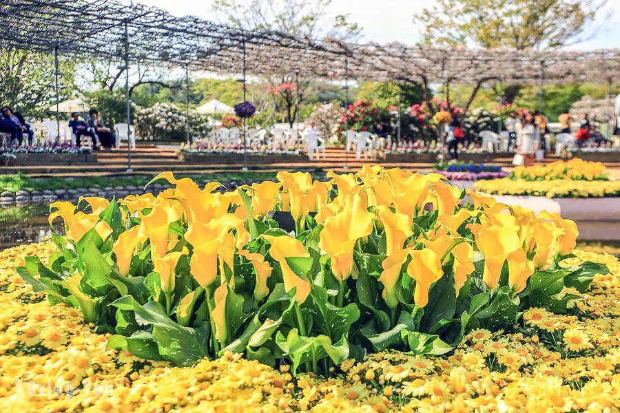 足利花卉公園花卉