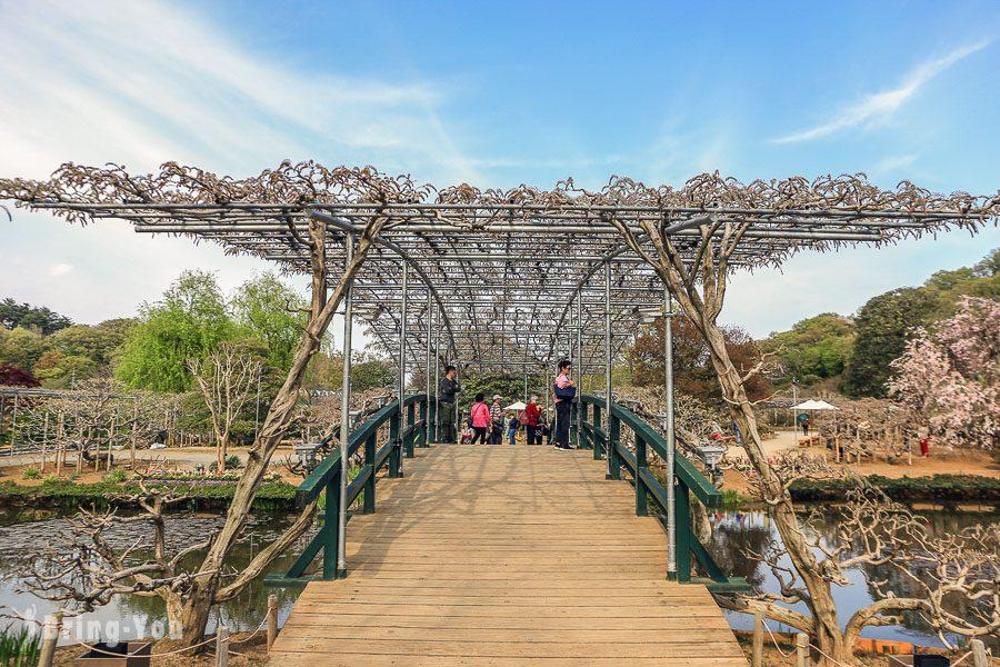 足利花卉公園粉紅花橋