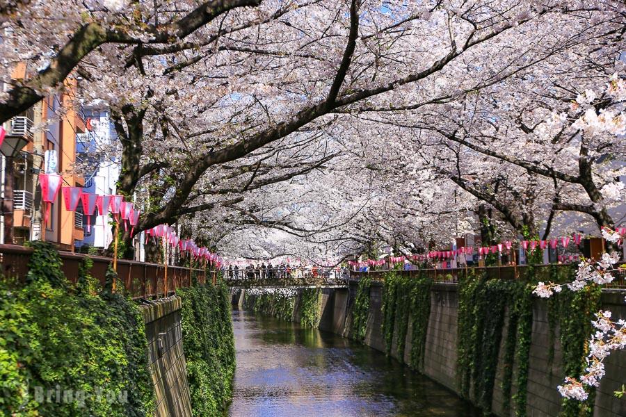 【東京賞櫻】目黑川櫻花祭:中目黑夢幻粉紅櫻花河、夜櫻攝影景點分享(含開花時間、花期)