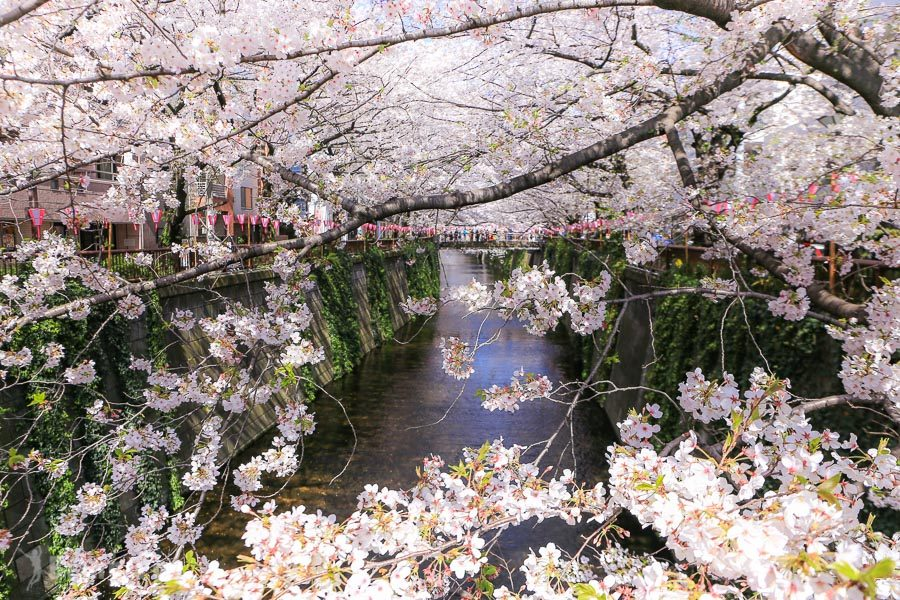 目黑川櫻花祭