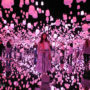 teamLab Borderless Tokyo: Personal Experience, Best Route to Visit, Essential Tips and Online Tickets to Beat the Crowds