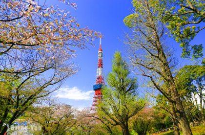 【東京鐵塔拍攝景點】芝公園:抓住櫻花與東京鐵塔瞬間(麻布十番)