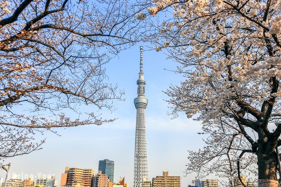 【東京賞櫻景點】隅田公園櫻花祭,有經典河畔晴空塔櫻花照的櫻花百選名所