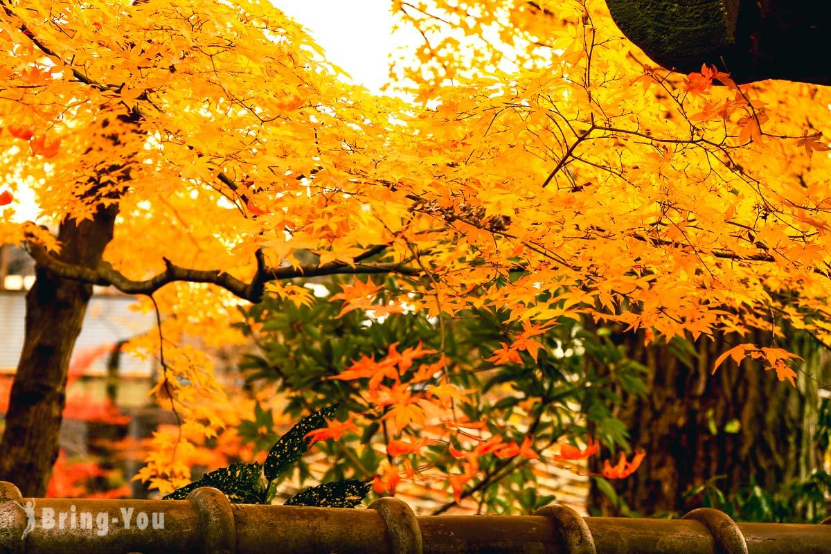 東京上野公園賞楓
