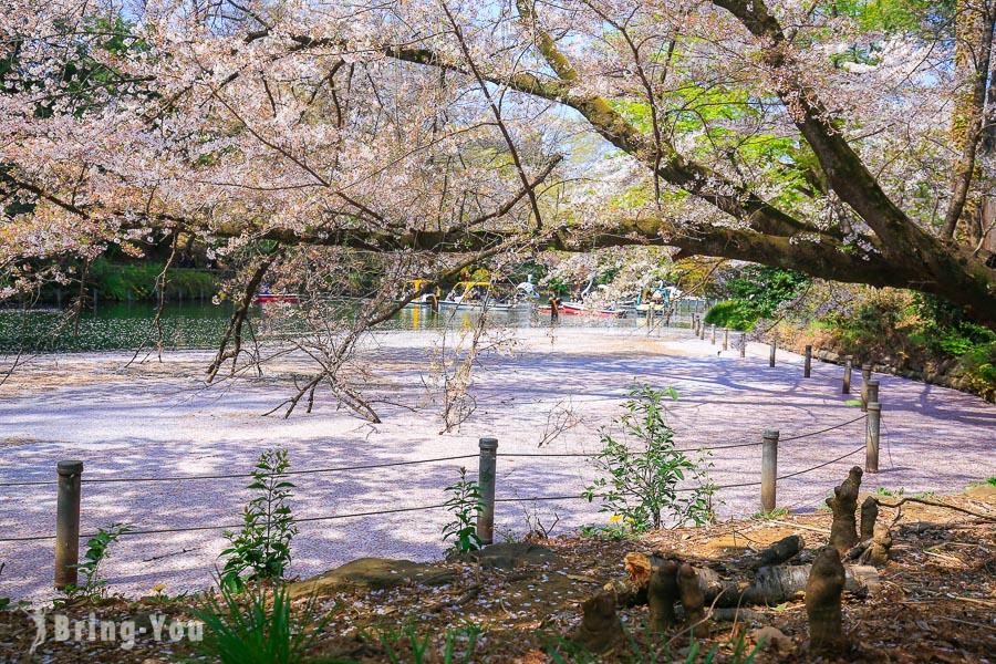 【東京賞櫻景點】井之頭恩賜公園,吉祥寺超美免費櫻花水景