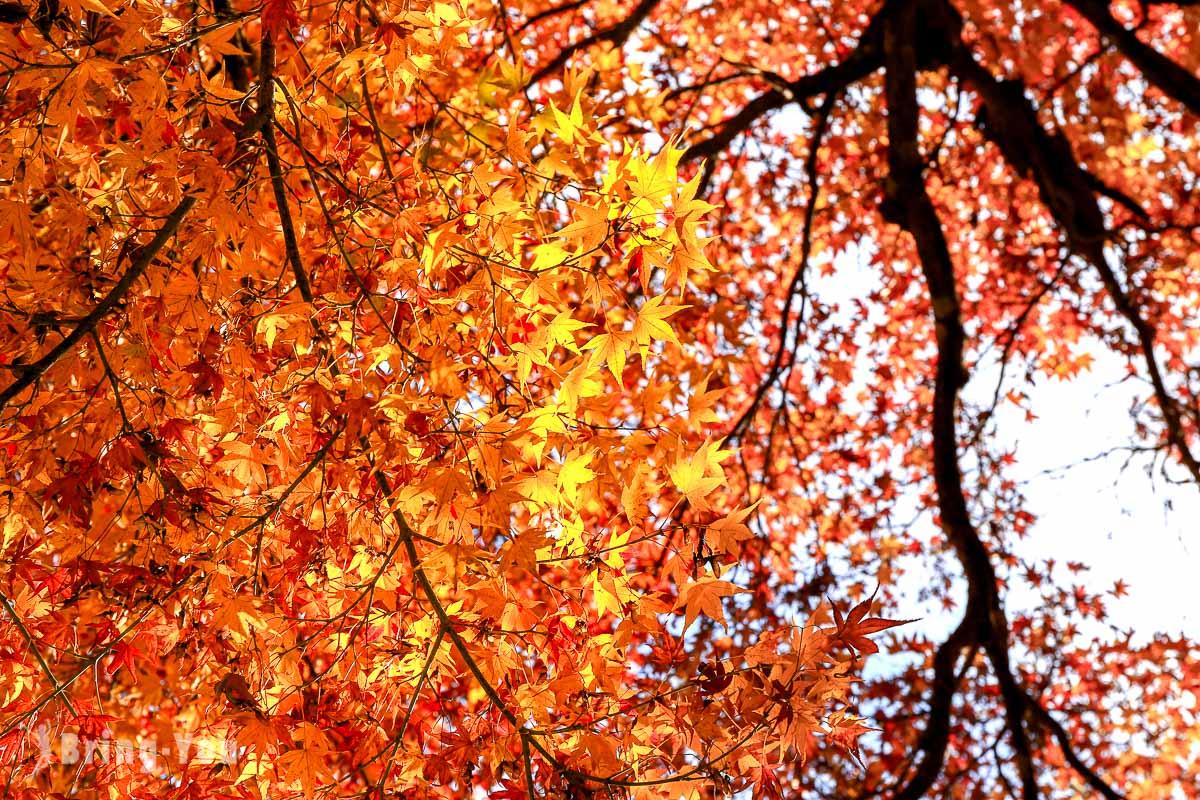 嵐山常寂光寺:京都賞楓賞櫻景點,綠光顯影與鮮活蘚苔搭襯嵐山市容