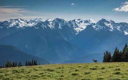 【西雅圖出發】美國奧林匹克國家公園一日遊