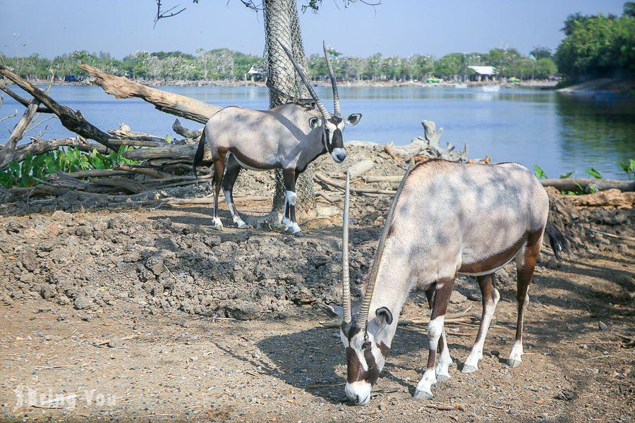 Safari World 曼谷賽佛瑞野生世界