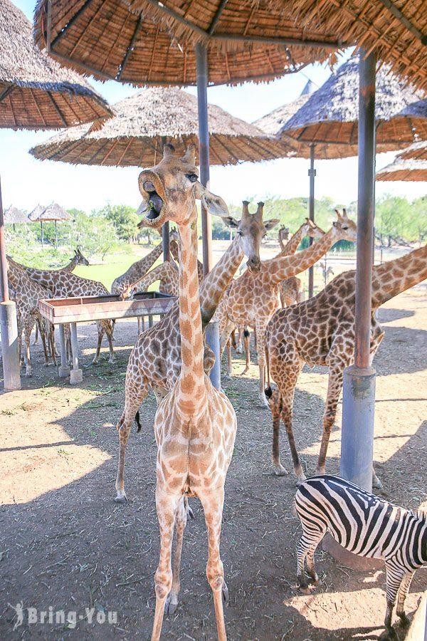 Safari World 曼谷賽佛瑞海洋公園