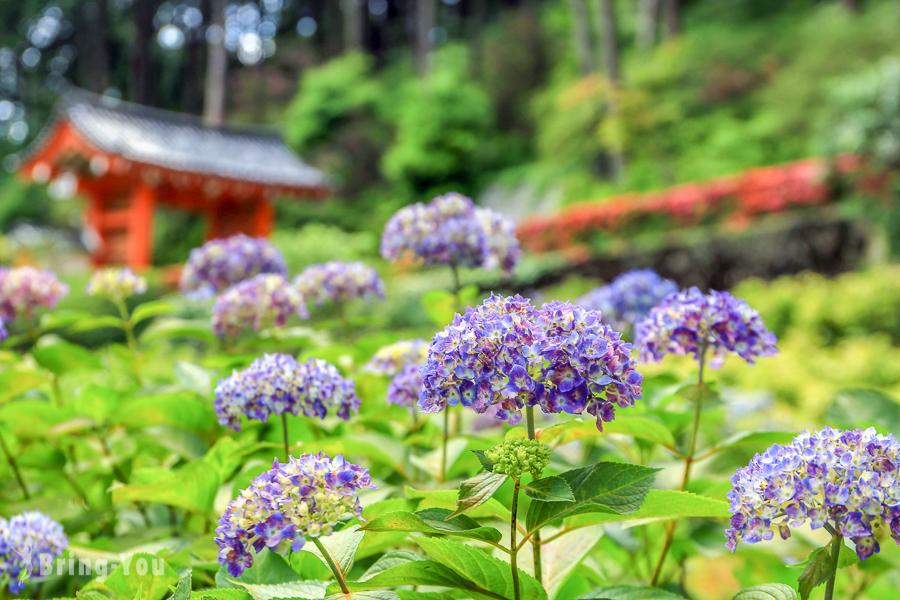 【京都六月景點】宇治三室戶寺繡球花園:來去日本紫陽花三大名所賞花