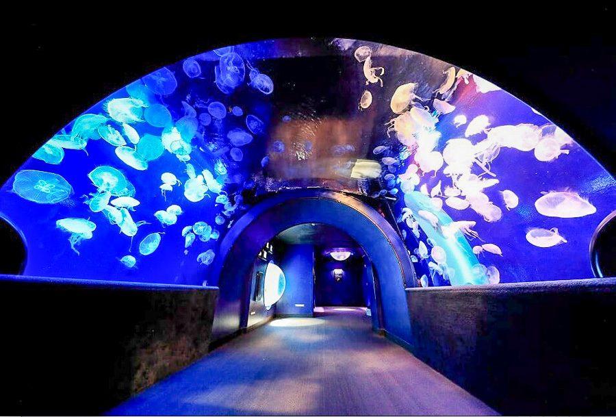 池袋陽光水族館