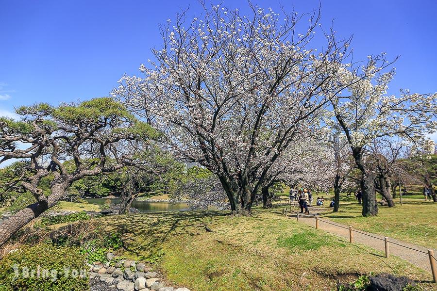 濱離宮恩賜庭園櫻花林