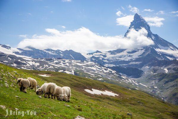 【阿爾卑斯山旅遊】瑞士、法國群峰,德國、奧地利山湖美景小鎮景點&