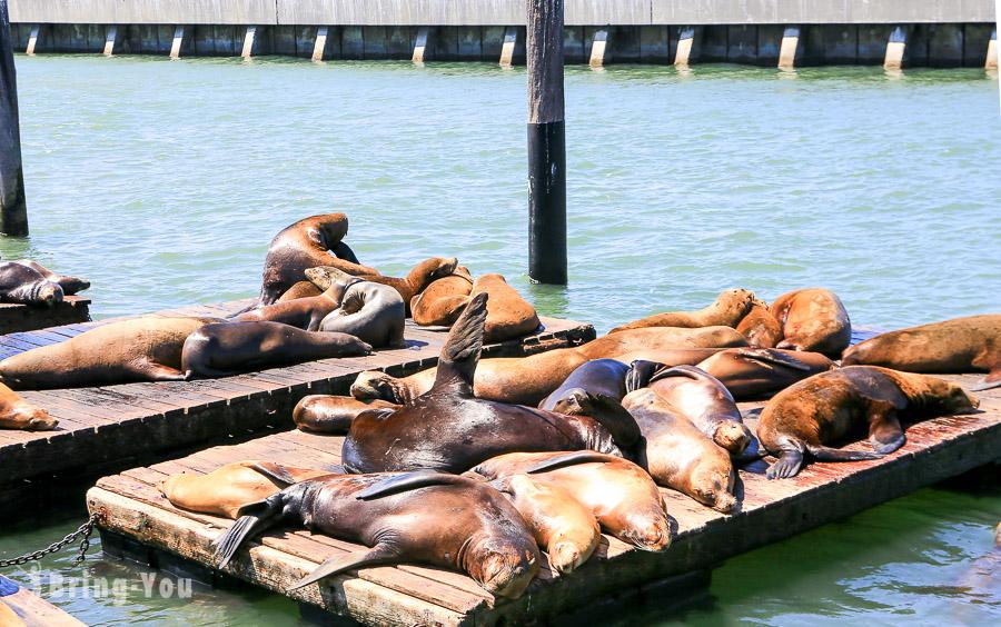 【舊金山漁人碼頭】Fisherman's Wharf:39號碼頭看海獅、喝酸麵包蛤蜊濃湯、吉拉德里廣場