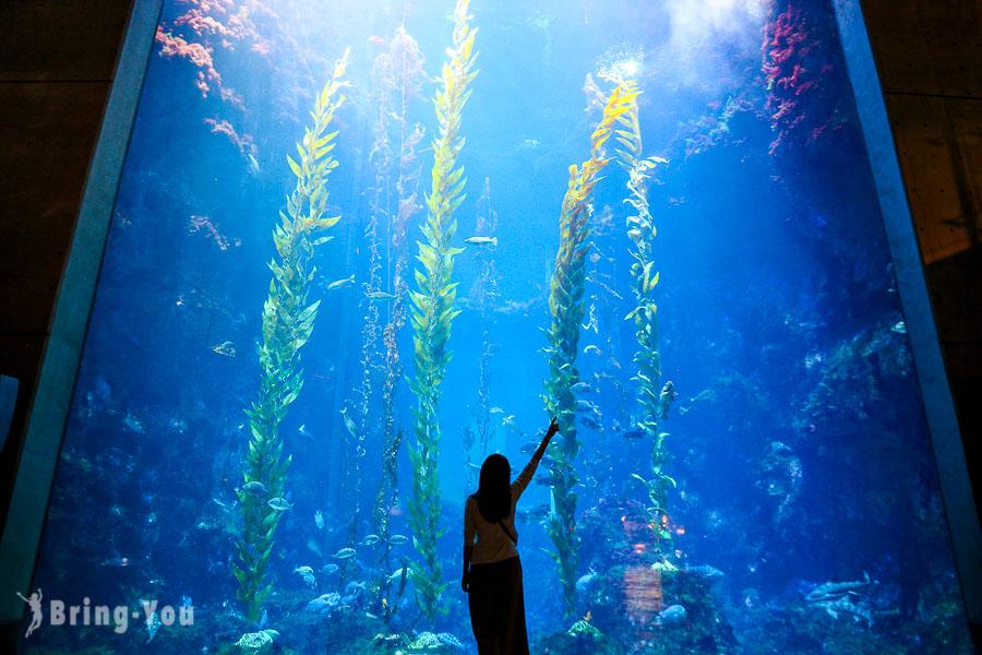 【夜宿海生館】夜宿區域怎麼選、住宿費用、完整活動行程攻略:世界水域館海藻森林區經驗分享